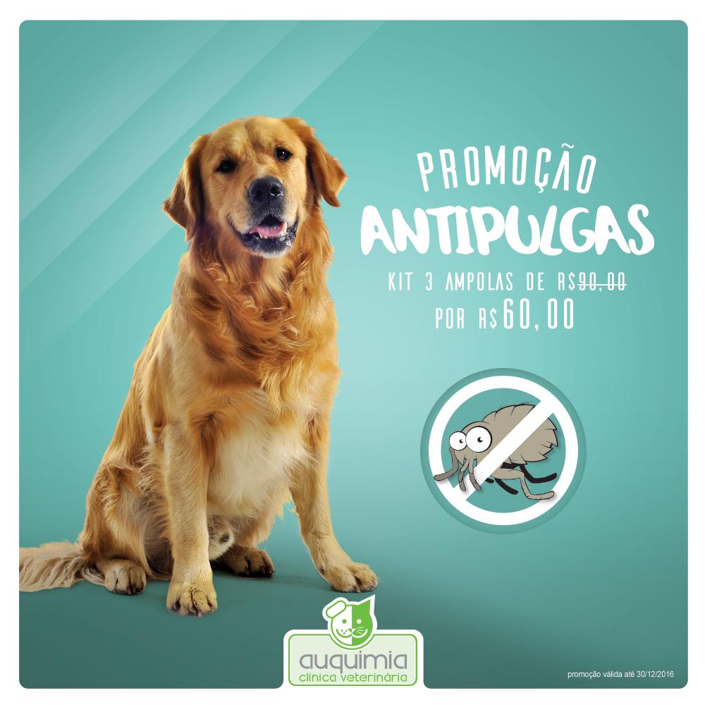 Promoção Anti pulgas