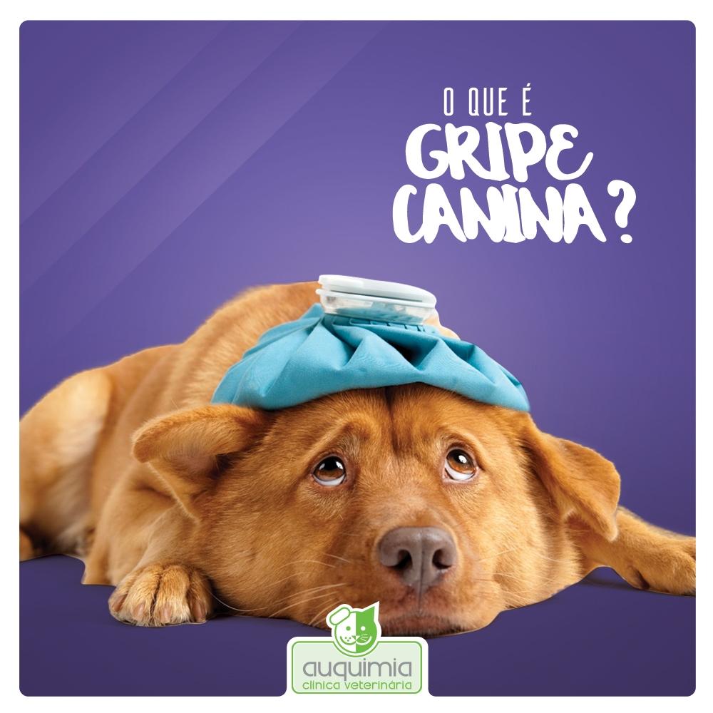 O Que é Gripe Canina